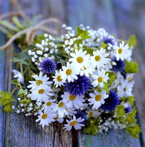 цветы полевые картинки